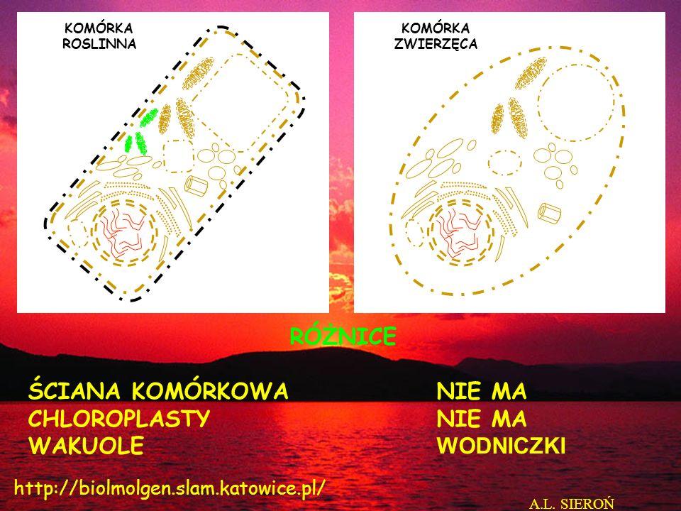 KOMÓRKA ROSLINNA KOMÓRKA ZWIERZĘCA RÓŻNICE ŚCIANA KOMÓRKOWANIE MA CHLOROPLASTYNIE MA WAKUOLE WODNICZKI A.L. SIEROŃ http://biolmolgen.slam.katowice.pl/