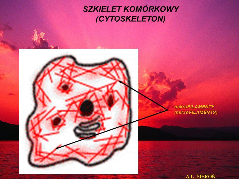 mikroFILAMENTY(microFILAMENTS) SZKIELET KOMÓRKOWY (CYTOSKELETON) A.L. SIEROŃ