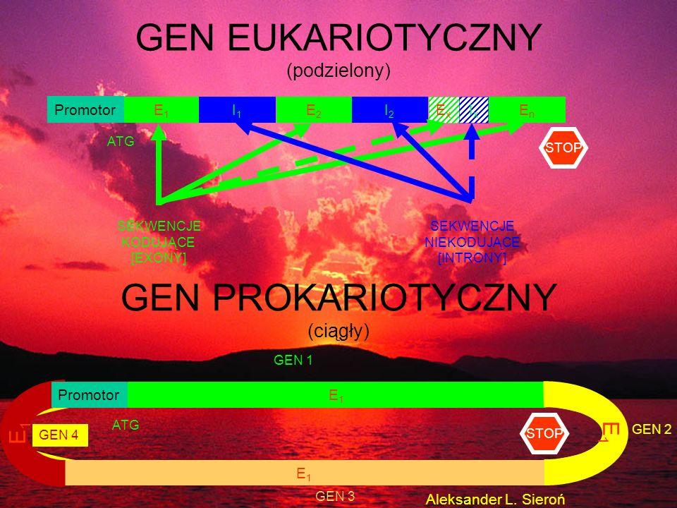 Promotor E1E1 I1I1 E2E2 I2I2 EnEn ExEx IxIx GEN EUKARIOTYCZNY (podzielony) GEN PROKARIOTYCZNY (ciągły) E1E1 ATG SEKWENCJE KODUJĄCE [EXONY] SEKWENCJE N