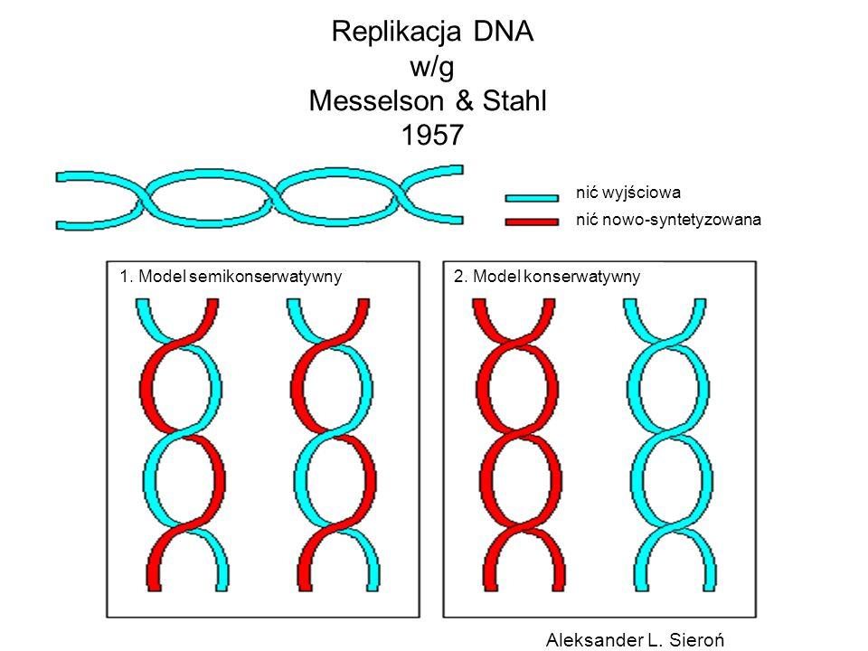 Replikacja DNA w/g Messelson & Stahl 1957 1. Model semikonserwatywny2. Model konserwatywny nić wyjściowa nić nowo-syntetyzowana Aleksander L. Sieroń