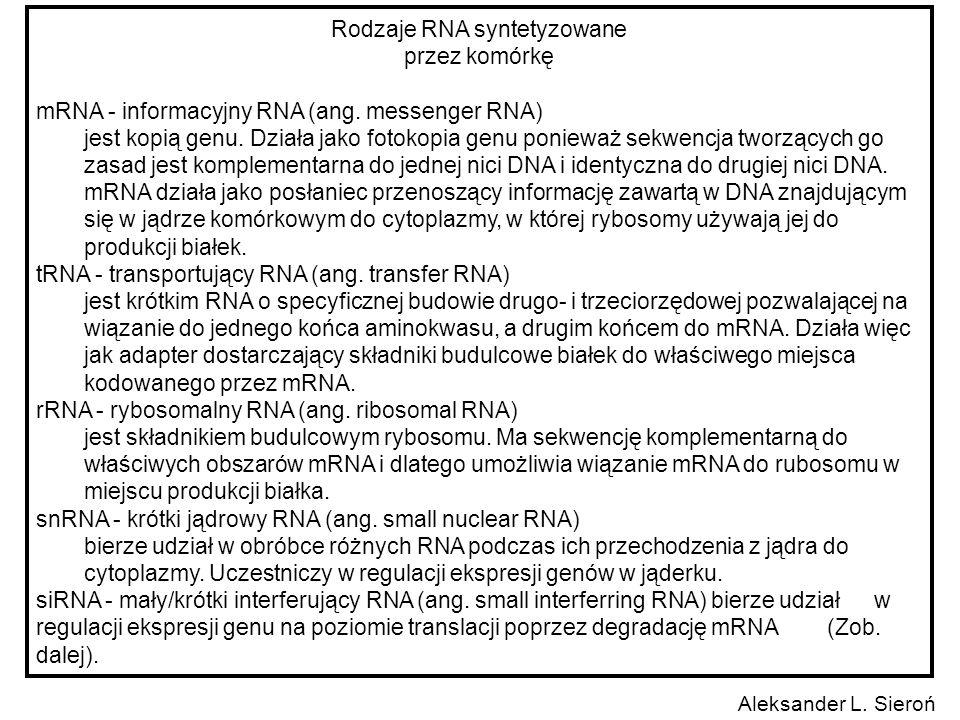 Rodzaje RNA syntetyzowane przez komórkę mRNA - informacyjny RNA (ang. messenger RNA) jest kopią genu. Działa jako fotokopia genu ponieważ sekwencja tw