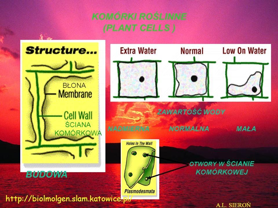 Komórki HeLa zielone od 5-fluorourydyny wbudowanej do RNA. http://www.cellnucleus.org/
