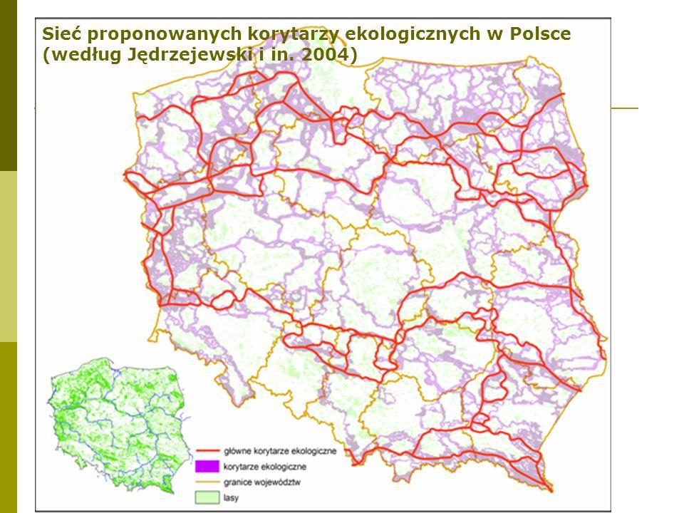 Sieć proponowanych korytarzy ekologicznych w Polsce (według Jędrzejewski i in. 2004)
