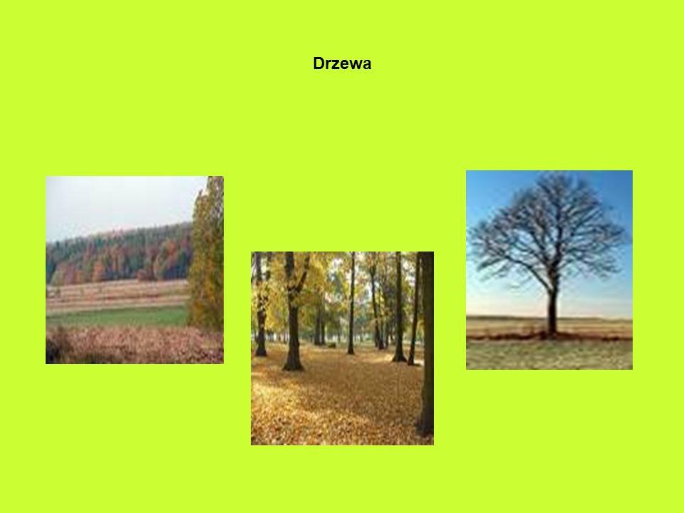 Pierwszy dzień jesieni – 23 września Miesiące jesienne to: wrzesień październik listopad Pogoda Złota jesień Słotna jesień Cechy jesieni :