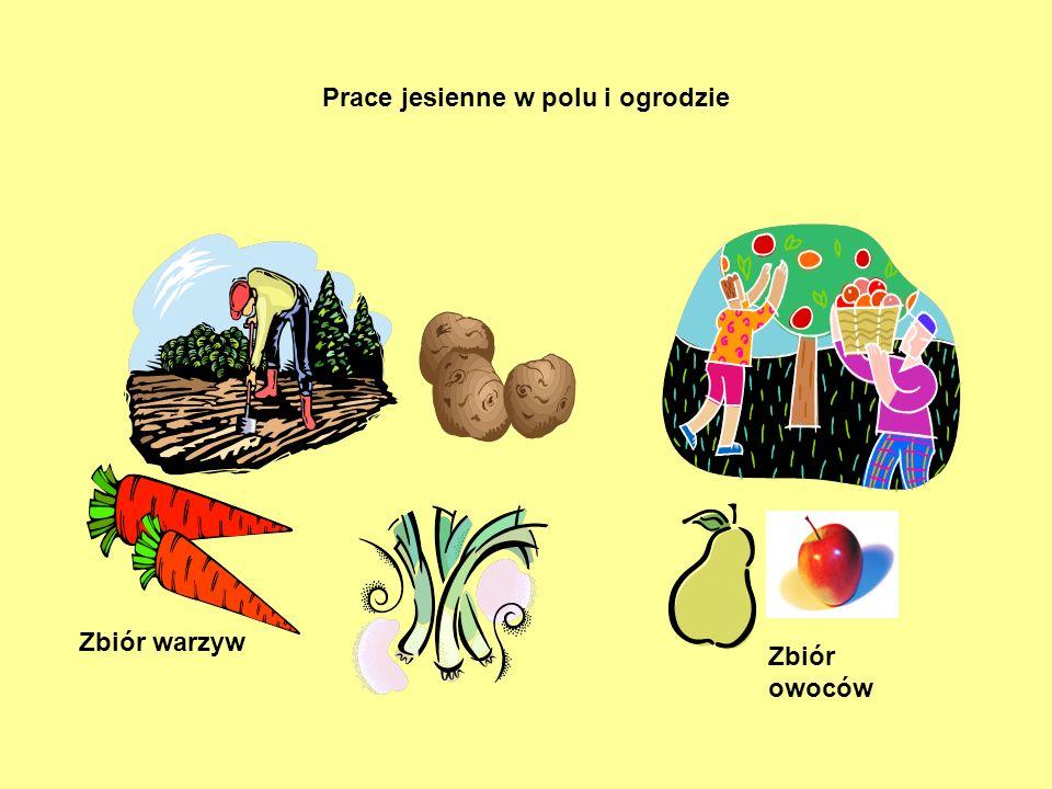 Prace jesienne w polu i ogrodzie Zbiór owoców Zbiór warzyw