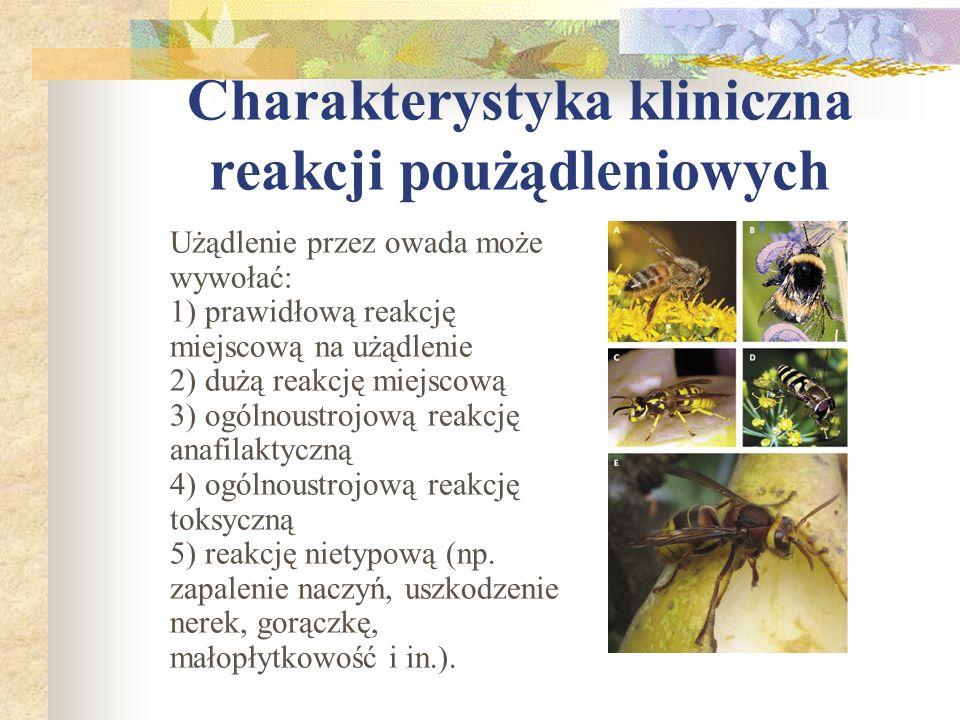 Charakterystyka kliniczna reakcji poużądleniowych Użądlenie przez owada może wywołać: 1) prawidłową reakcję miejscową na użądlenie 2) dużą reakcję mie