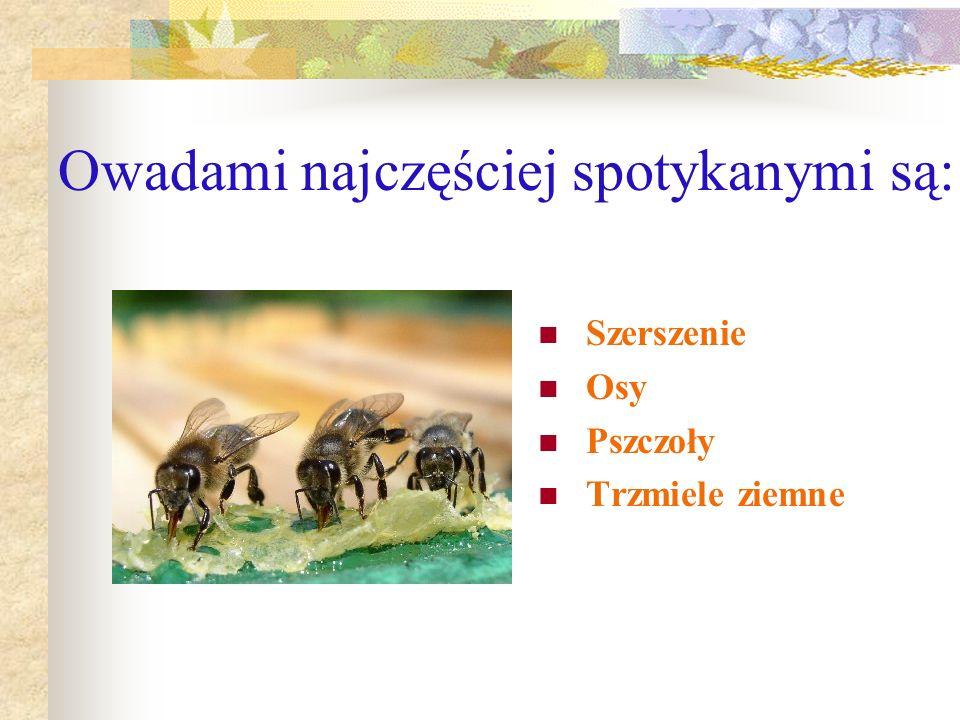 Owadami najczęściej spotykanymi są: Szerszenie Osy Pszczoły Trzmiele ziemne