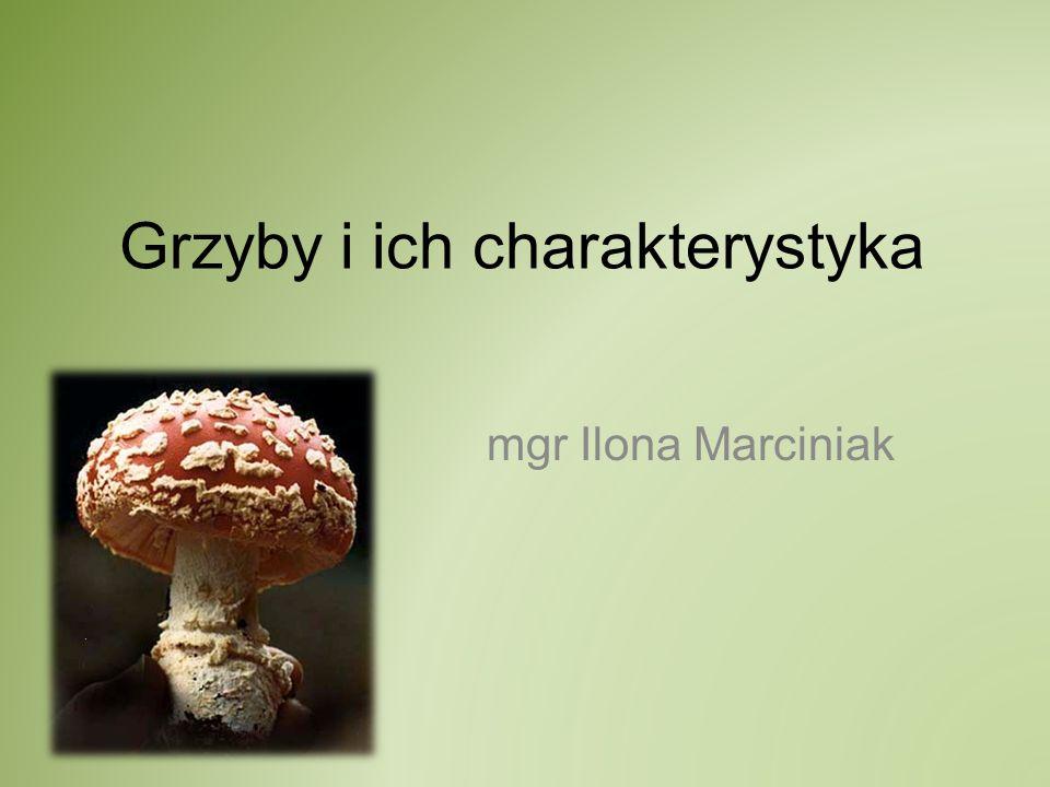 Grzyby i ich charakterystyka mgr Ilona Marciniak