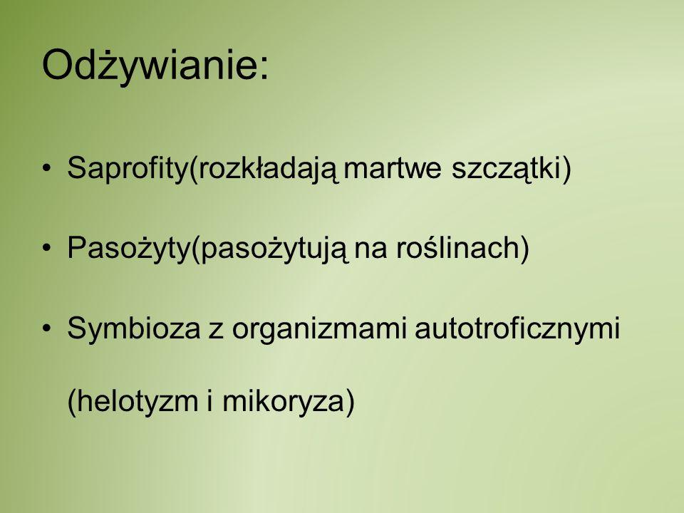 Odżywianie: Saprofity(rozkładają martwe szczątki) Pasożyty(pasożytują na roślinach) Symbioza z organizmami autotroficznymi (helotyzm i mikoryza)
