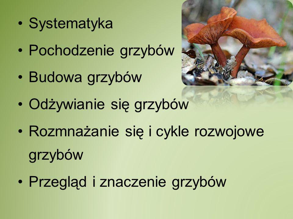 Systematyka Królestwo: Grzyby (Fungi) –Typ: Skoczki (Chytridiomycota) synchytrium, olpidium –Typ: Sprzężniowce (Zygomycota) pleśniak biały, rozłożek czernirjący –Typ: Workowce (Ascomycota) drożdże, dzieżka pomarańczowa –Typ: Podstawczaki (Basidiomycota) pieczarka, rdza źdźbłowa