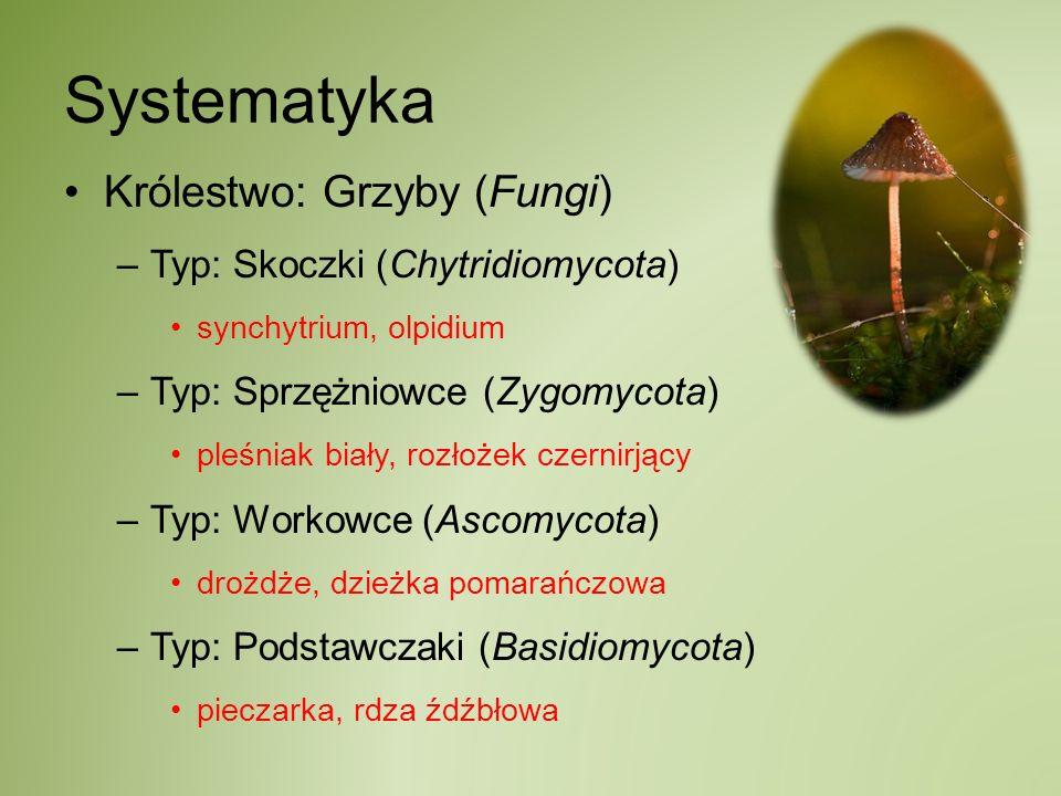 Systematyka Królestwo: Grzyby (Fungi) –Typ: Skoczki (Chytridiomycota) synchytrium, olpidium –Typ: Sprzężniowce (Zygomycota) pleśniak biały, rozłożek c