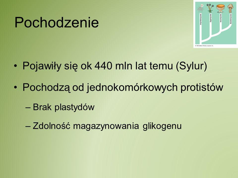Strony www: http://ethnopharmacology.com/fungi/mush.jpg http://www.mun.ca/biology/scarr/Phylogeny_of_Fungi.htm http://www.elkhornslough.org/journal/050202journal.htm http://www.ulicafotograficzna.pl/foto/1769/ http://www.kuchniaonline.pl/index.php/Grzyby http://luskiewnik.strefa.pl/psychostymulantia/p19.htm http://www.salamandra.org.pl/magazyn/b17a04.html http://uczenzklasa.gazeta.pl/runo2/ http://www.fotoplatforma.pl/fotografia/pl/4507/ http://darynatury.w.interia.pl/porow/por157.htm http://darynatury.w.interia.pl/zrodla/grz107.htm http://www.kki.pl/zenit/grzyby_spyt/ga49.htm http://www.kki.pl/zenit/grzyby_spyt/grzybobranie_jesien01.htm http://grzyby.atspace.org/rozmnazanie.htm http://sylwiapawlaczyk1.webpark.pl/roz_pliki/image005.jpg