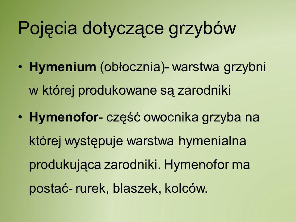 Pojęcia dotyczące grzybów Hymenium (obłocznia)- warstwa grzybni w której produkowane są zarodniki Hymenofor- część owocnika grzyba na której występuje