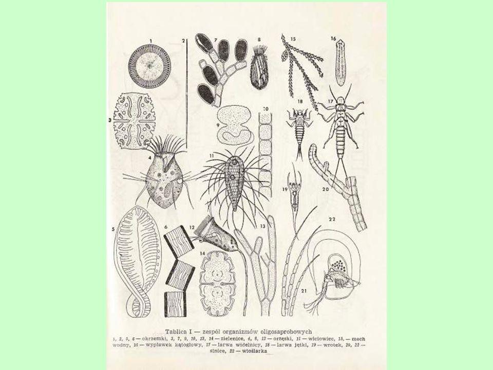 Pierwszy system saprobowy został opublikowany przez Kolkwitza i Marssona w 1902 roku.