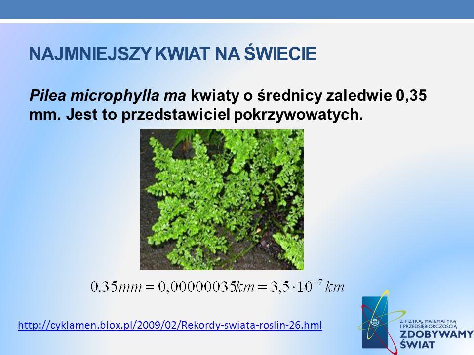 NAJMNIEJSZY KWIAT NA ŚWIECIE Pilea microphylla ma kwiaty o średnicy zaledwie 0,35 mm. Jest to przedstawiciel pokrzywowatych. http://cyklamen.blox.pl/2