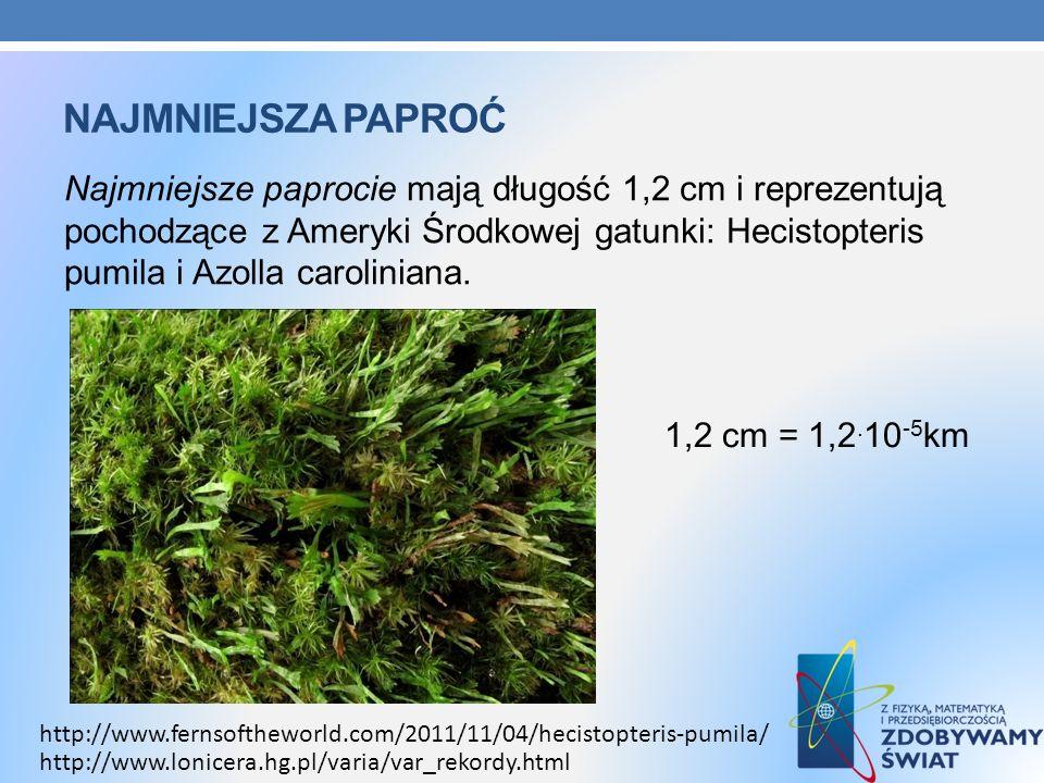 NAJMNIEJSZA PAPROĆ Najmniejsze paprocie mają długość 1,2 cm i reprezentują pochodzące z Ameryki Środkowej gatunki: Hecistopteris pumila i Azolla carol