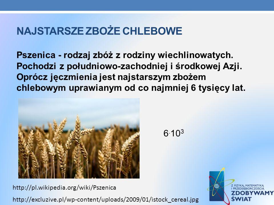 NAJSTARSZE ZBOŻE CHLEBOWE Pszenica - rodzaj zbóż z rodziny wiechlinowatych. Pochodzi z południowo-zachodniej i środkowej Azji. Oprócz jęczmienia jest