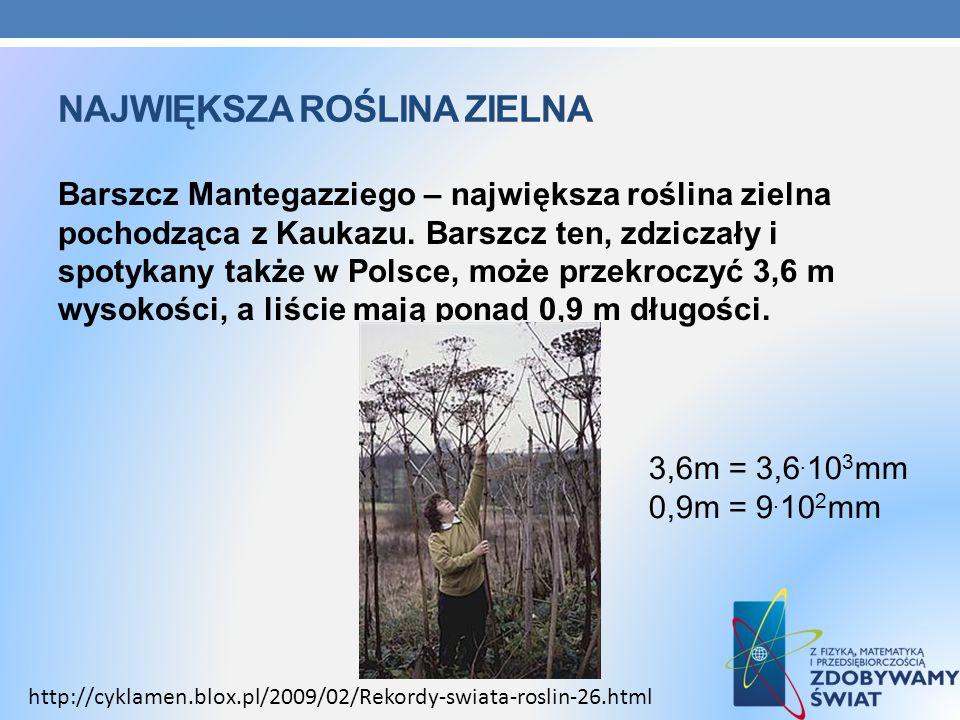 NAJWIĘKSZA ROŚLINA ZIELNA Barszcz Mantegazziego – największa roślina zielna pochodząca z Kaukazu. Barszcz ten, zdziczały i spotykany także w Polsce, m