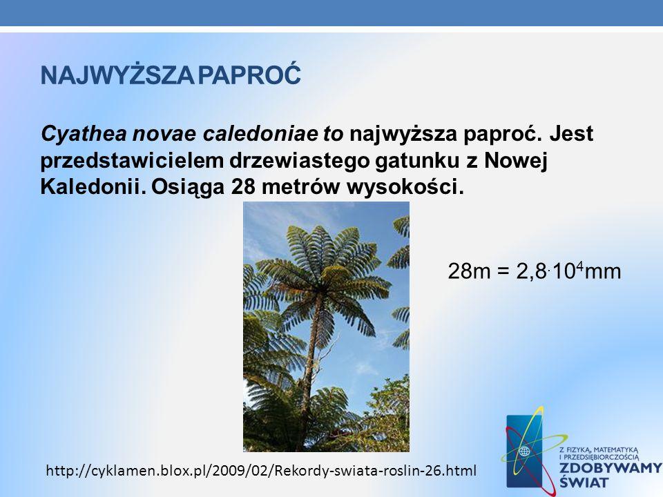 NAJWYŻSZA PAPROĆ Cyathea novae caledoniae to najwyższa paproć. Jest przedstawicielem drzewiastego gatunku z Nowej Kaledonii. Osiąga 28 metrów wysokośc