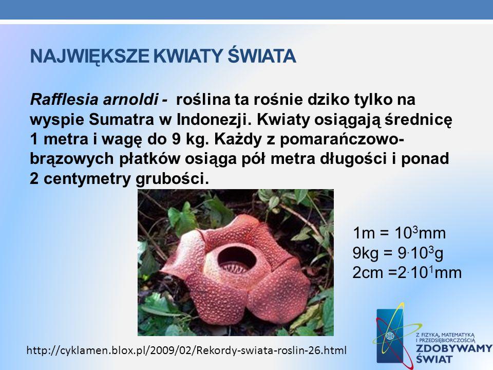 NAJWIĘKSZE KWIATY ŚWIATA Rafflesia arnoldi - roślina ta rośnie dziko tylko na wyspie Sumatra w Indonezji. Kwiaty osiągają średnicę 1 metra i wagę do 9
