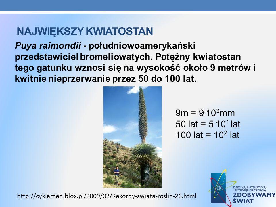 NAJWIĘKSZY KWIATOSTAN Puya raimondii - południowoamerykański przedstawiciel bromeliowatych. Potężny kwiatostan tego gatunku wznosi się na wysokość oko