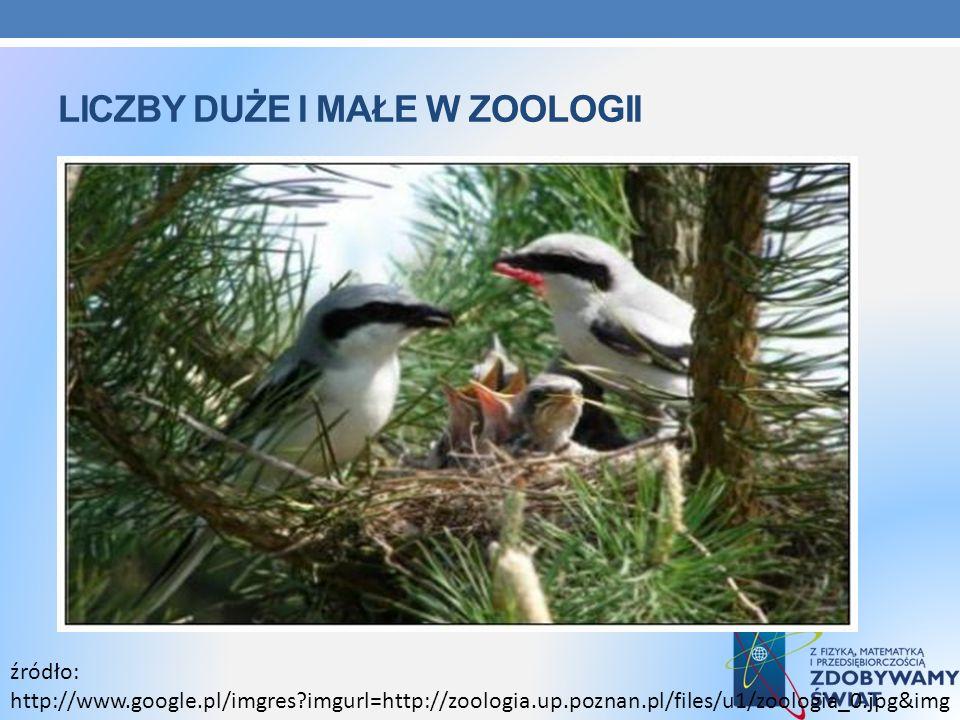 LICZBY DUŻE I MAŁE W ZOOLOGII źródło: http://www.google.pl/imgres?imgurl=http://zoologia.up.poznan.pl/files/u1/zoologia_0.jpg&img