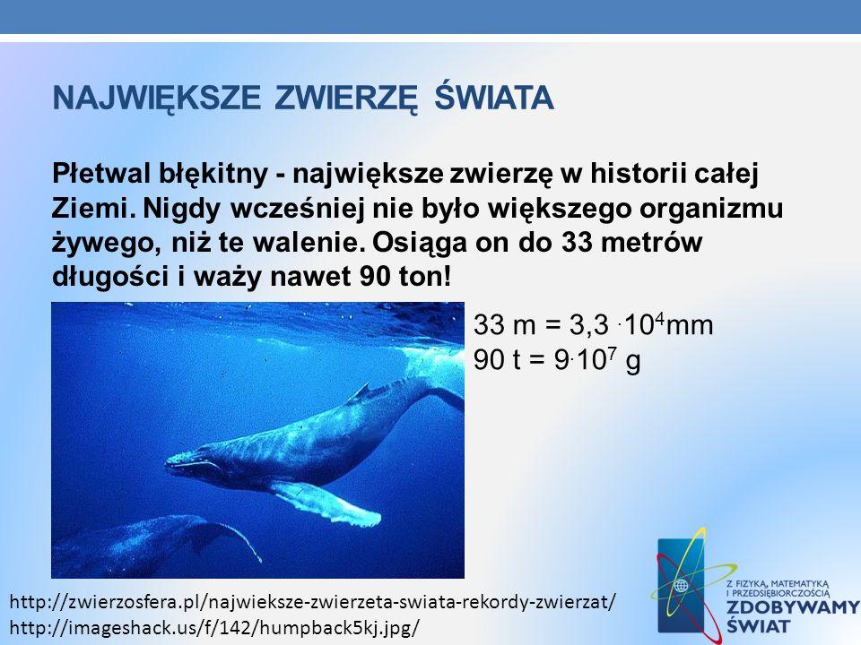 NAJWIĘKSZE ZWIERZĘ ŚWIATA Płetwal błękitny - największe zwierzę w historii całej Ziemi. Nigdy wcześniej nie było większego organizmu żywego, niż te wa