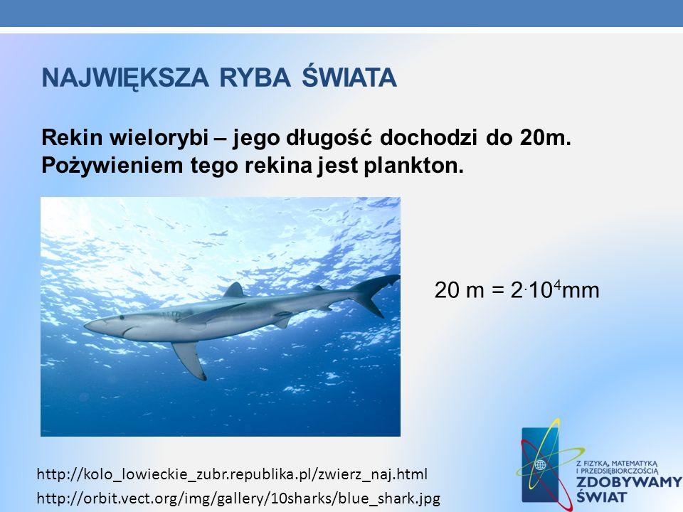 NAJWIĘKSZA RYBA ŚWIATA Rekin wielorybi – jego długość dochodzi do 20m. Pożywieniem tego rekina jest plankton. http://kolo_lowieckie_zubr.republika.pl/