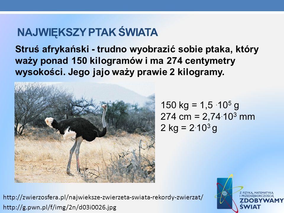 NAJWIĘKSZY PTAK ŚWIATA Struś afrykański - trudno wyobrazić sobie ptaka, który waży ponad 150 kilogramów i ma 274 centymetry wysokości. Jego jajo waży