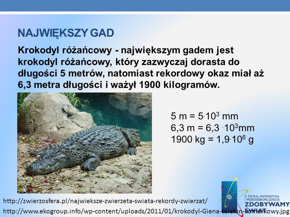 NAJWIĘKSZY GAD Krokodyl różańcowy - największym gadem jest krokodyl różańcowy, który zazwyczaj dorasta do długości 5 metrów, natomiast rekordowy okaz