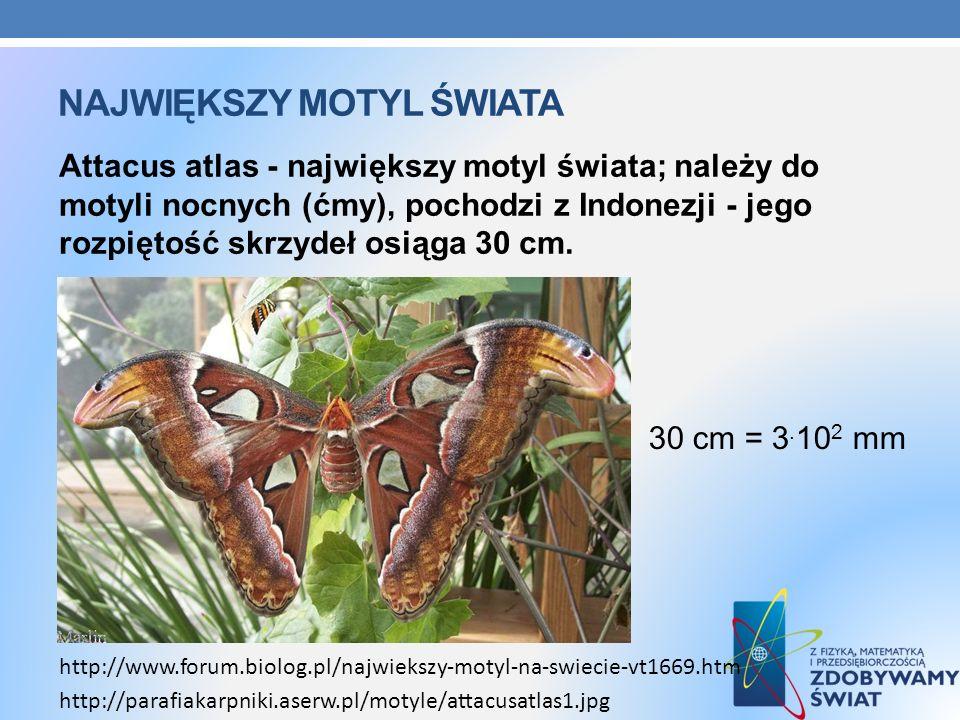 NAJWIĘKSZY MOTYL ŚWIATA Attacus atlas - największy motyl świata; należy do motyli nocnych (ćmy), pochodzi z Indonezji - jego rozpiętość skrzydeł osiąg