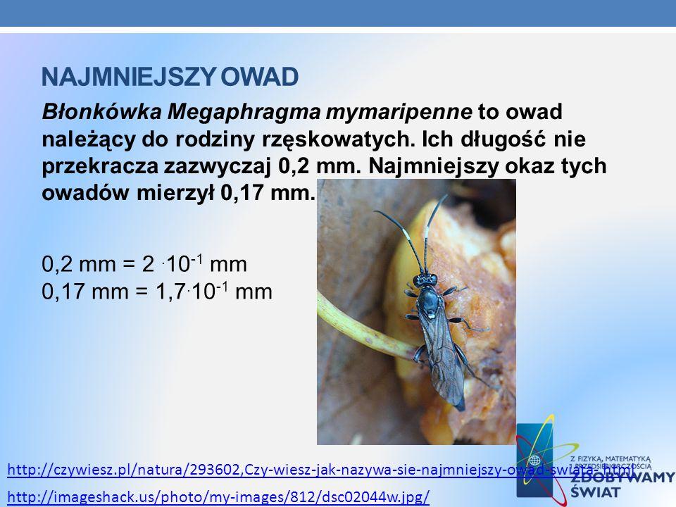 NAJMNIEJSZY OWAD Błonkówka Megaphragma mymaripenne to owad należący do rodziny rzęskowatych. Ich długość nie przekracza zazwyczaj 0,2 mm. Najmniejszy