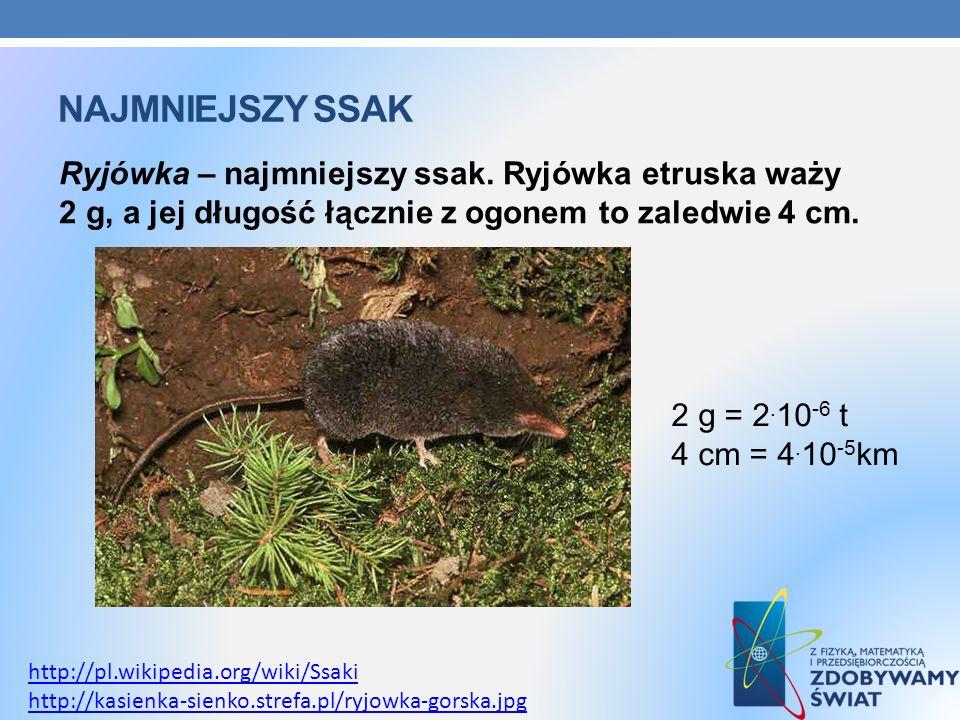 NAJMNIEJSZY SSAK Ryjówka – najmniejszy ssak. Ryjówka etruska waży 2 g, a jej długość łącznie z ogonem to zaledwie 4 cm. http://pl.wikipedia.org/wiki/S