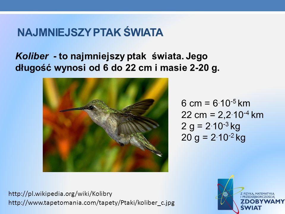 NAJMNIEJSZY PTAK ŚWIATA Koliber - to najmniejszy ptak świata. Jego długość wynosi od 6 do 22 cm i masie 2-20 g. http://pl.wikipedia.org/wiki/Kolibry h