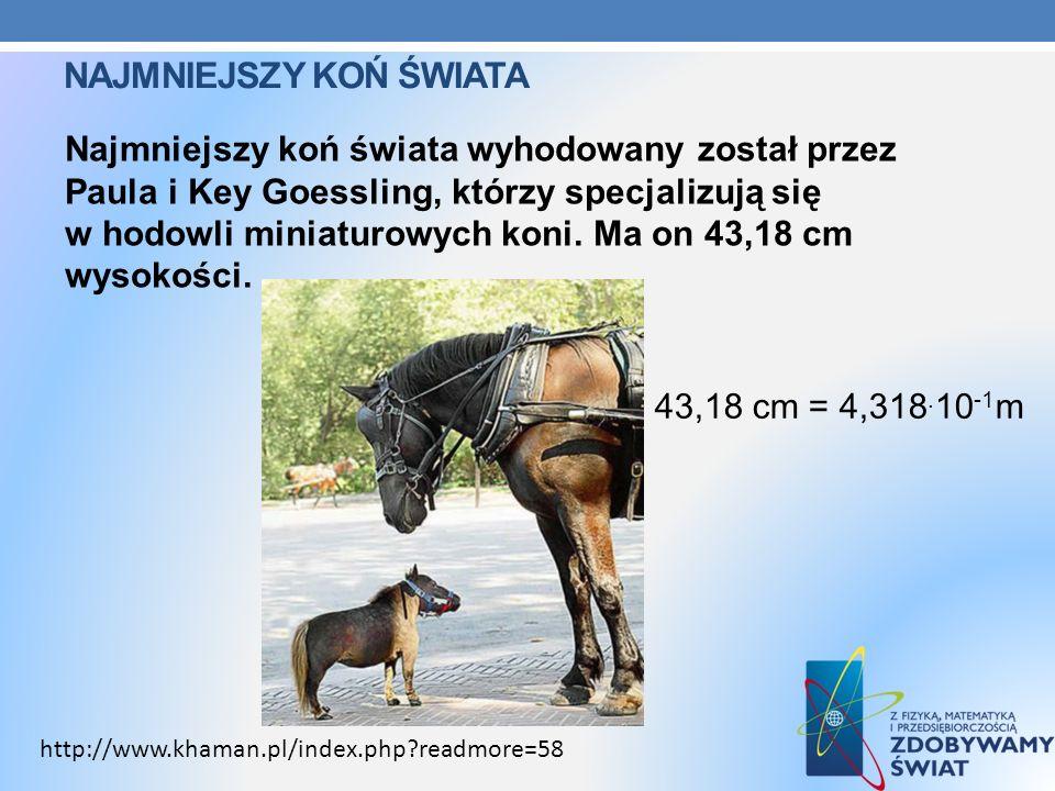 NAJMNIEJSZY KOŃ ŚWIATA Najmniejszy koń świata wyhodowany został przez Paula i Key Goessling, którzy specjalizują się w hodowli miniaturowych koni. Ma