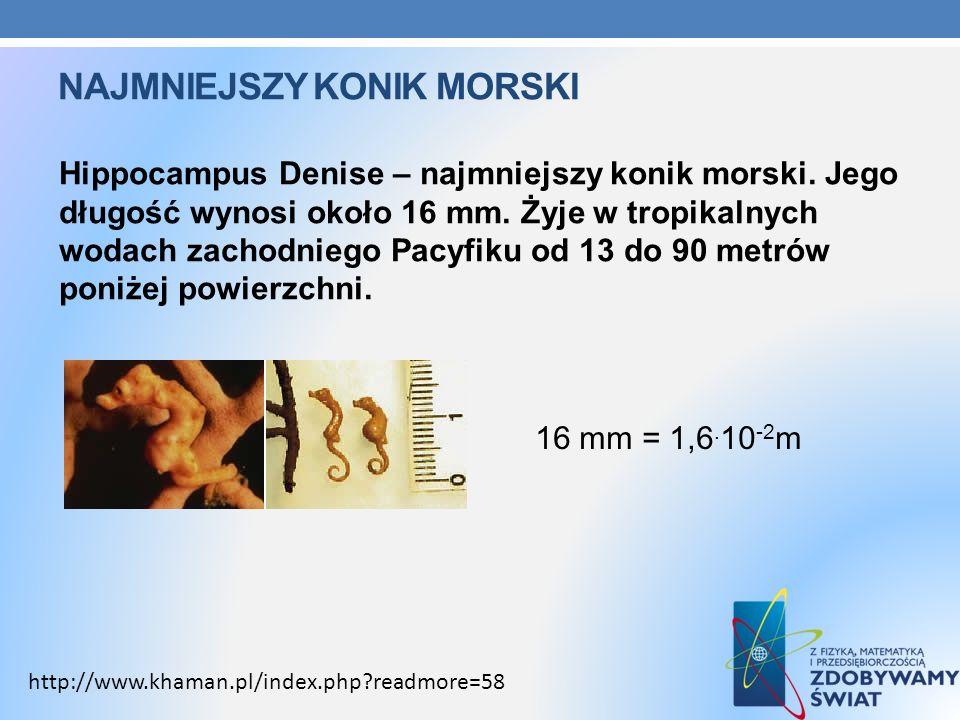 NAJMNIEJSZY KONIK MORSKI Hippocampus Denise – najmniejszy konik morski. Jego długość wynosi około 16 mm. Żyje w tropikalnych wodach zachodniego Pacyfi
