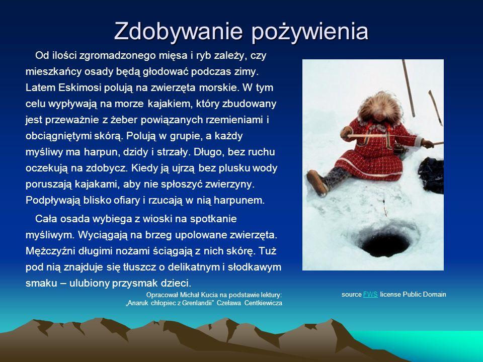 Zdobywanie pożywienia Od ilości zgromadzonego mięsa i ryb zależy, czy mieszkańcy osady będą głodować podczas zimy. Latem Eskimosi polują na zwierzęta