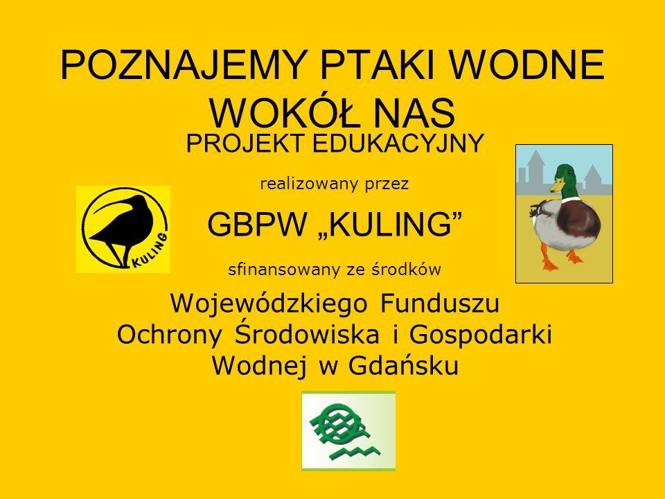 POZNAJEMY PTAKI WODNE WOKÓŁ NAS PROJEKT EDUKACYJNY realizowany przez GBPW KULING sfinansowany ze środków Wojewódzkiego Funduszu Ochrony Środowiska i G