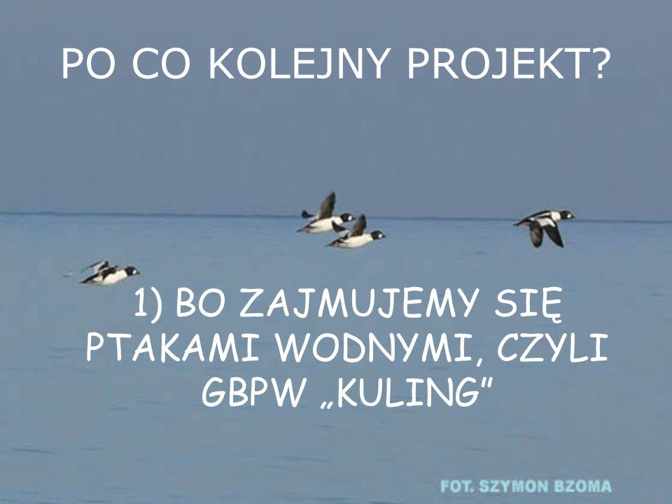 Współpraca poprzez stronę www.kuling.org.pl Nawiązanie współpracy pomiędzy GBPW Kuling a uczestnikami projektu poprzez stronę internetową www.kuling.org.pl Stworzenie bazy danych oraz informacyjnej podstrony internetowej o projekcie i jego efektach.