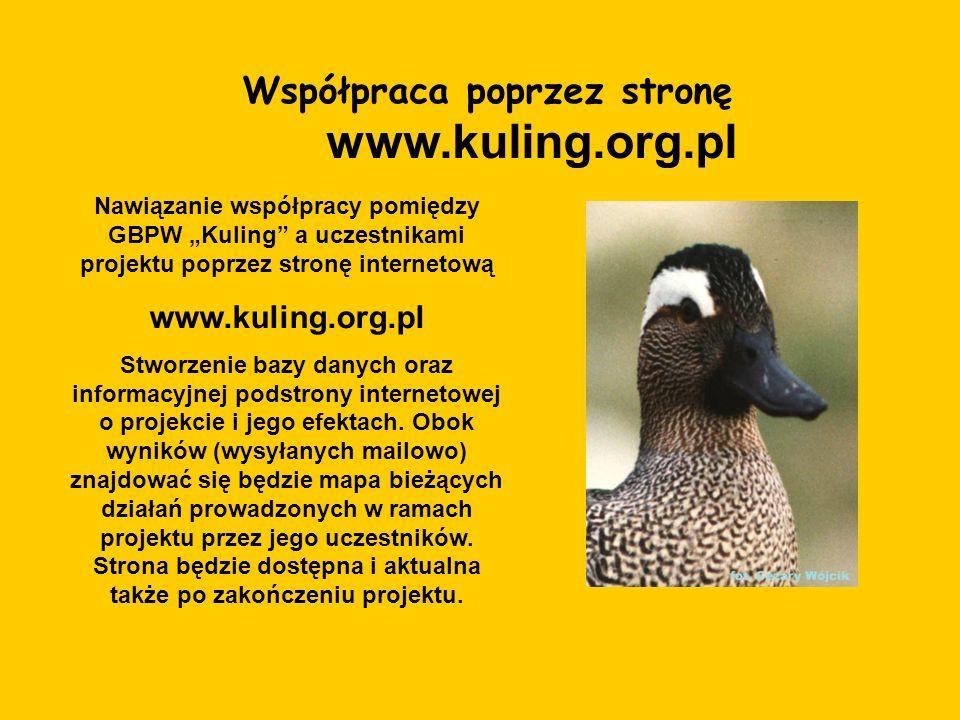 Współpraca poprzez stronę www.kuling.org.pl Nawiązanie współpracy pomiędzy GBPW Kuling a uczestnikami projektu poprzez stronę internetową www.kuling.o