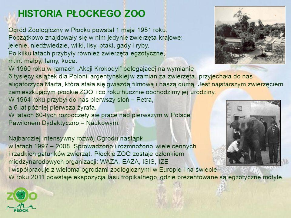 HISTORIA PŁOCKEGO ZOO Ogród Zoologiczny w Płocku powstał 1 maja 1951 roku. Początkowo znajdowały się w nim jedynie zwierzęta krajowe: jelenie, niedźwi