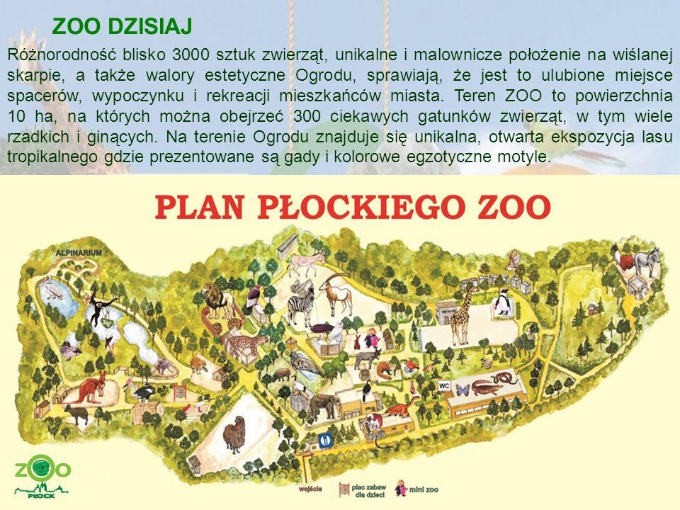 ZOO DZISIAJ Obecnie w ZOO jest wiele ciekawych ekspozycji: słoniarnia z wybiegiem, wyspa gibbonów, wybiegi makaków japońskich, żyraf, kangurów, lwów, lampartów perskich, pawilon ptaków tropikalnych oraz największa w Polsce kolekcja najmniejszych małp świata – tamaryn i marmozet.