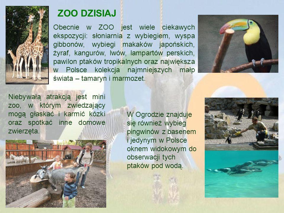 ZOO DZISIAJ Obecnie w ZOO jest wiele ciekawych ekspozycji: słoniarnia z wybiegiem, wyspa gibbonów, wybiegi makaków japońskich, żyraf, kangurów, lwów,
