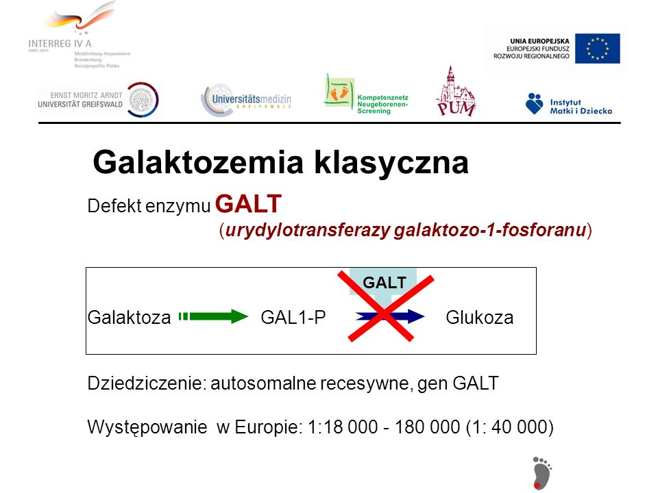 Defekt enzymu GALT (urydylotransferazy galaktozo-1-fosforanu) Galaktoza GAL1-P Glukoza Dziedziczenie: autosomalne recesywne, gen GALT Występowanie w E