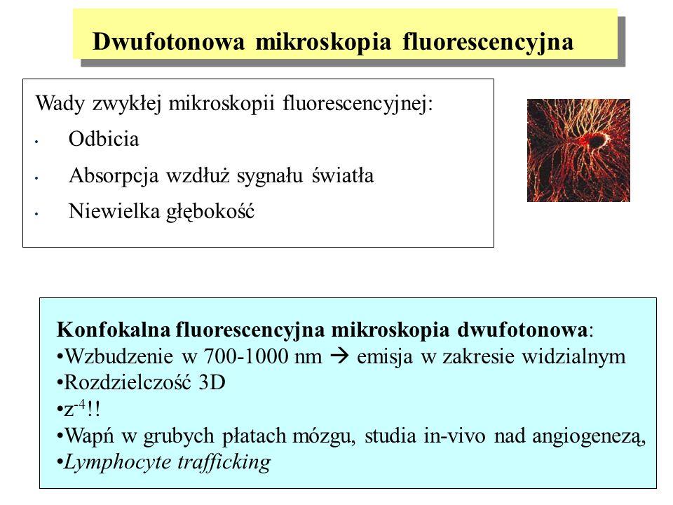 Dwufotonowa mikroskopia fluorescencyjna Wady zwykłej mikroskopii fluorescencyjnej: Odbicia Absorpcja wzdłuż sygnału światła Niewielka głębokość Konfok