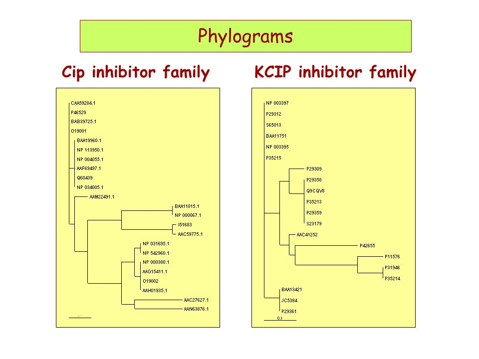 Phylograms Cip inhibitor familyKCIP inhibitor family Phylograms
