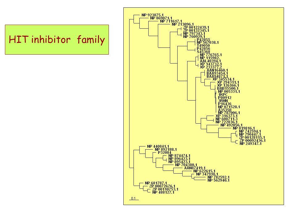 HIT inhibitor family