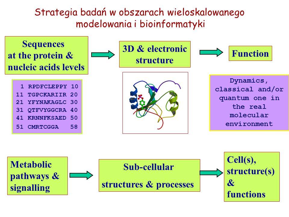 Osoba organizującaKonferencja (K) Workshop (W) Miejsce i data P.ZielenkiewiczBioinformatics, Metabolic Pathways and Structural Biology (W) Warszawa maj 13-16, 2004 M.NiezgódkaComputational Approaches to Prediction of Structure Formation Phenomena (W) Warszawa wrzesień 6-10, 2004 M.NiezgódkaComplex Processes: Modelling, Simulation and Optimisation (W) Będlewo listopad 4-7, 2004 P.BałaAdvanced Course in Grid Technologies and Biomolecular/ Bioinformatics Applications (W) Kraków grudzień 12, 2004 A.JerzmanowskiGene expression and silencing in plants – from model to crop (W) Radzików marzec 9-13, 2005 J.LelukProteins: Sequence-Structure-Function Relations; Theoretical and Experiment Approach (K) Warszawa kwiecień 6-10, 2005 B.LesyngThe 4 th International Conference on Inhibitors of Protein Kinases (K) Warszawa czerwiec 25-29, 2005 B.LesyngMicroscopic and Mesoscopic Modelling of Specific Molecular Recognition Processes (W) Warszawa czerwiec 29, 2005 Konferencje i warsztaty 2004/05 w ramach europejskiego CD MAMBA