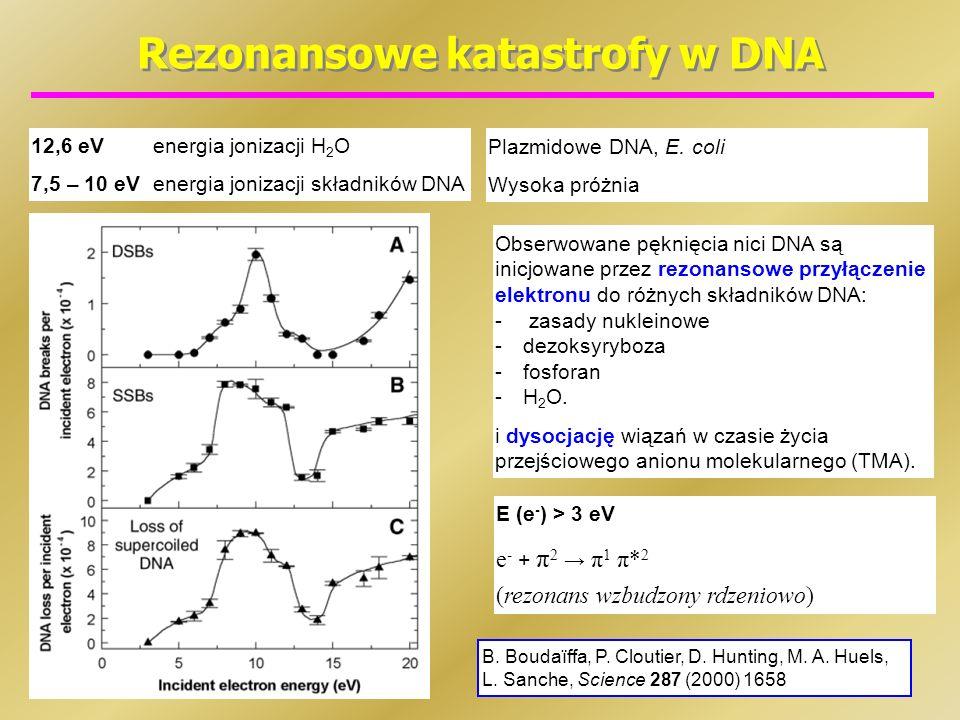 Rezonansowe katastrofy w DNA 12,6 eVenergia jonizacji H 2 O 7,5 – 10 eVenergia jonizacji składników DNA B. Boudaїffa, P. Cloutier, D. Hunting, M. A. H