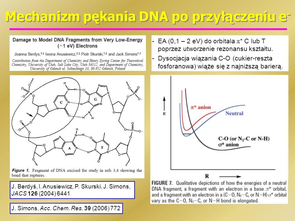 Mechanizm pękania DNA po przyłączeniu e - -EA (0,1 – 2 eV) do orbitala π * C lub T poprzez utworzenie rezonansu kształtu. -Dysocjacja wiązania C-O (cu